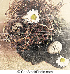 grunge bird eggs in nest.