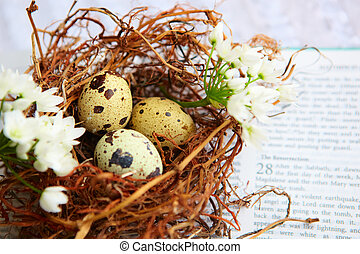 bird eggs in nest on Bible.