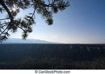Sunrise Rio Grande River Gorge Pine Tree Branch NM - Sunrise...