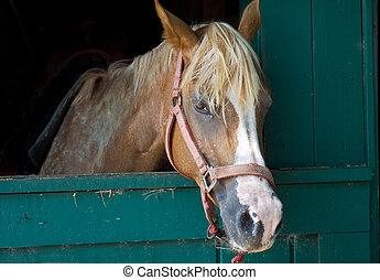 Brown Horse with White Streak, In Stable Stall - Horse...