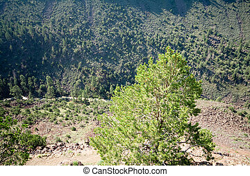 Looking Down Into Rio Grande River Gorge NM USA - Looking...