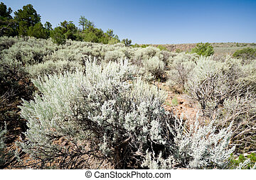 Sagebrush on Hillside in New Mexico Desert, USA - Sagebrush...