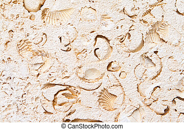 Full Frame Limestone with Embedded Fossils - Limestone full...