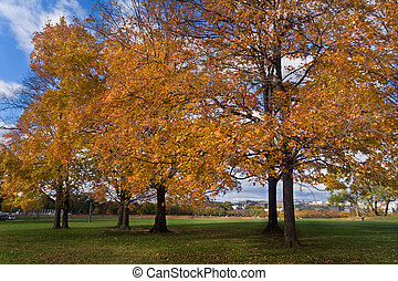 Yellow Orange Autumn Fall Trees Washington DC