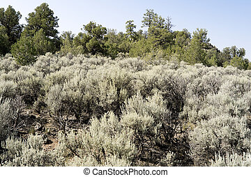 Sagebrush Outside Taos, New Mexico, USA - Sagebrush outside...