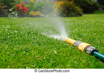 Garden Hosepipe. - garden hosepipe watering flowers and...