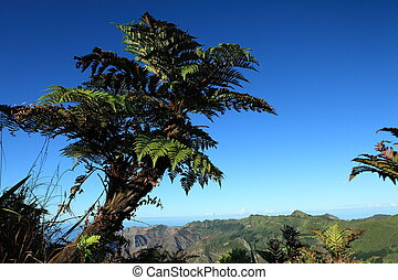 Endemic tree fern on St Helena - Endemic Tree Fern,...