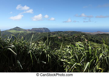 Longwood landscape on St Helena - New Zealand flax in the...