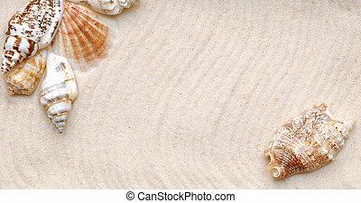 Concha marina, arena