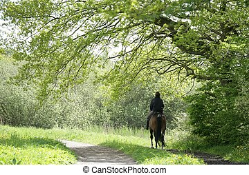ride - riding danish horses in a forest in spring