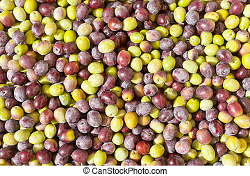 Freshly Harvested Olives Background - Background texture...