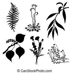 vector, Conjunto, plantas, blanco, Plano de fondo