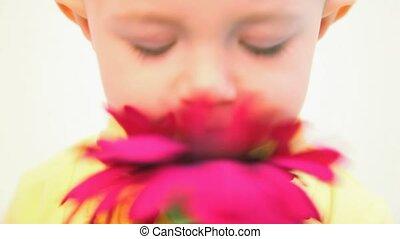 little girl smelling red flower against white background