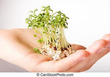pequeno, árvore, vida, verde, mão