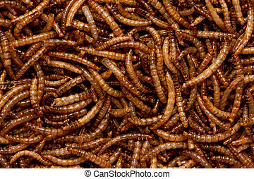 Mealworms - Full frame of dried mealworm larva.
