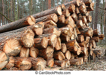 Timber - Stacked and cut logs for forestry