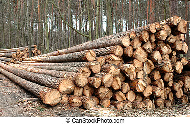 Wood - Stacked and cut logs for forestry