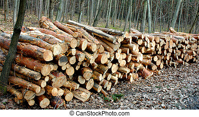 Lumber - Stacked and cut logs for forestry