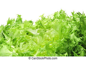 escarole endive - an escarole endive on a white background