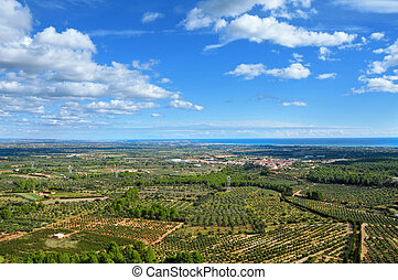 olive groves in Costa Daurada, Spain - aerial view of olive...