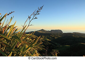 Flax plants in dawn light - Dawn breaking against New...
