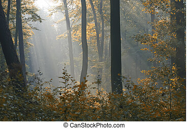 sunbeams - a forest illuminated by the sunbeams