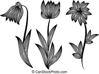 floral design elements, monochrome - vector floral design...
