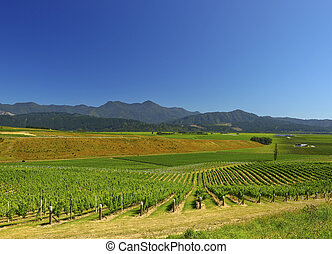 New Zealand Vineyard - A New Zealand vineyard on the south...