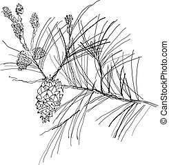 fir-tree branch - monochrome pen drawing fir-tree branch