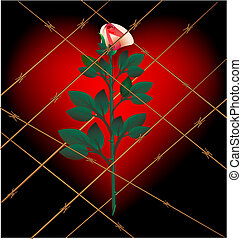 rose and lattice - on a dark background with a large crimson...