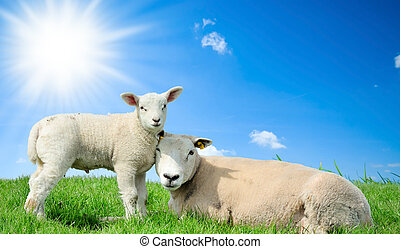 mère, mouton, elle, agneau, Printemps