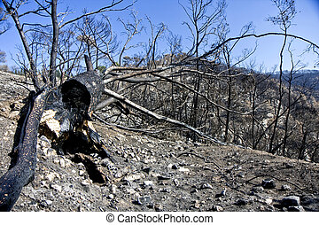 Forest after Fire - Forest at the Carmel mountain in Israel...