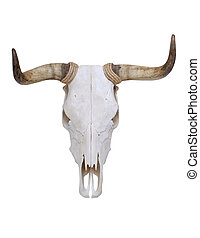 Skull of Bull - Dried Deer Skull isolated on a white...
