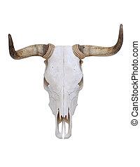 Skull of Bull - Dried Deer Skull isolated on a white...