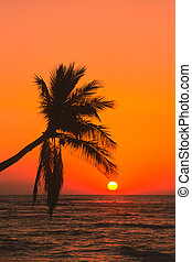 Palm Tree in Sunset