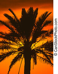 Palm Fronds in sunset