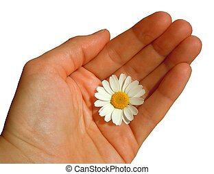 cultivating friendship - a hand holding daisy