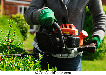 Hedge Trimmer. - Hedge trimmer cutting evergreen privet.