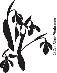 Snowdrop vector - snowdrop isolated on white background....