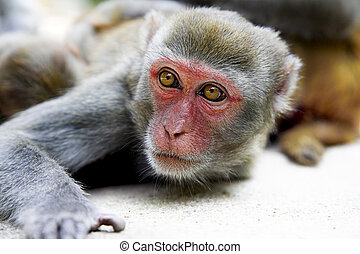 macaque - cute macaque resting in the tropic park