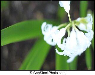 Shallow flower