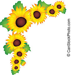 Sunflower vector - Sunflower isolated on white background...