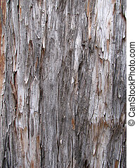 shaggy Arizona cypress bark - shaggy Arizona cypress...