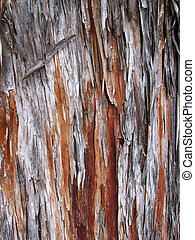 Arizona cypress bark - peeling Arizona cypress (Cupressus...