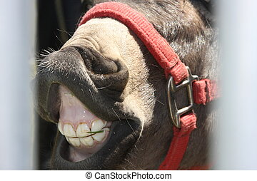 Smile Wide Jackass - Donkey smiling with grass in his teeth
