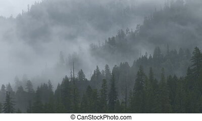 Misty Forest Ridges - Moderate time lapse showing heavily...