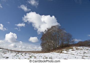 Trees Against the Blue Sky - Trees against the blue sky at...