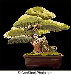 vector of the bonsai tree on a black background - miniature...