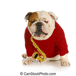 dog playing musical instrument - english bulldog playing...