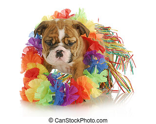 puppy hula dancer - puppy dressed like a hula dancer -...